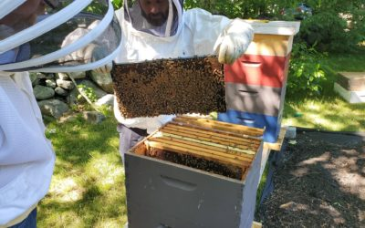 Beekeeping at Labrie Farm